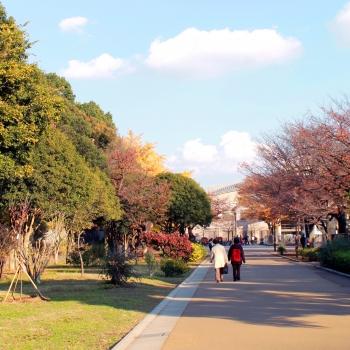 光が丘公園:徒歩20分(約1.6km)