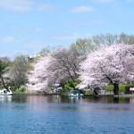 石神井公園(周辺)